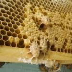 Mit kell tudni a méhpempőről?