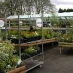 Kertészeti webáruház hatalmas kínálattal