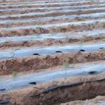 Agrofólia